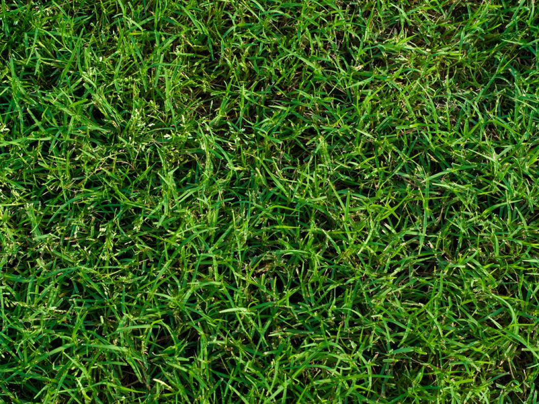 lawn maintenance concord nc